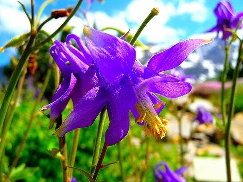 Bio et nature mes recettes bonne ann e - Initiatives fleurs et nature ...